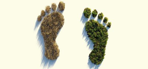 Jetzt anmelden: Studientag zum Thema Ökologie und Nachhaltigkeit